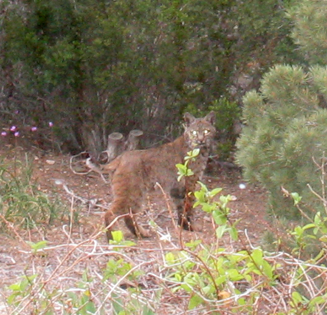 Bobcat 5-4-05
