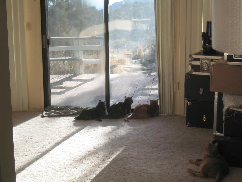 """""""Cat TV"""", 1/21/2006"""
